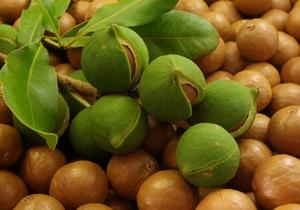 Орех макадамия для похудения